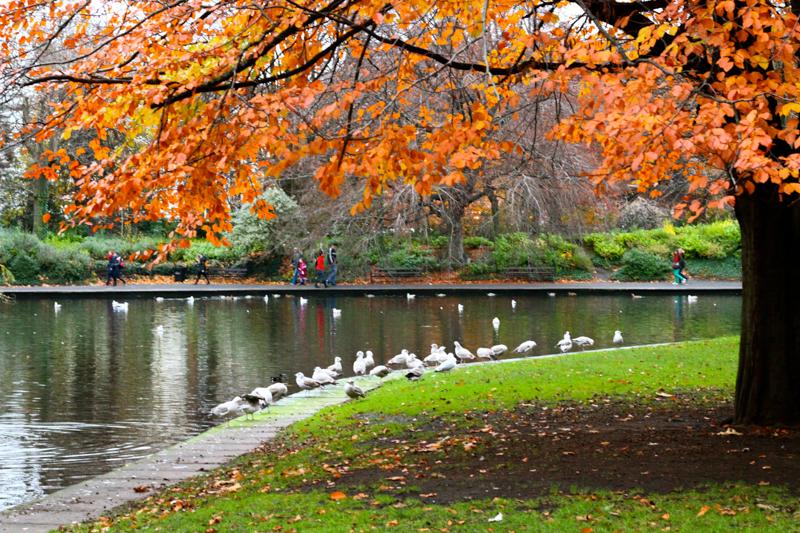 Dublin St. Green Park  (1 of 1)